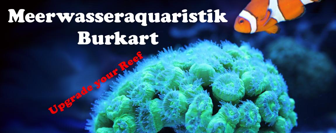 www.coralshop-burkart.de-Logo