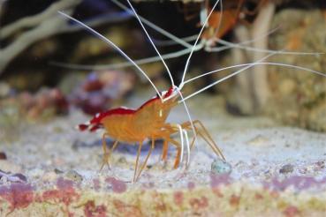 Von den Würmern die gedörrten Pflaumen